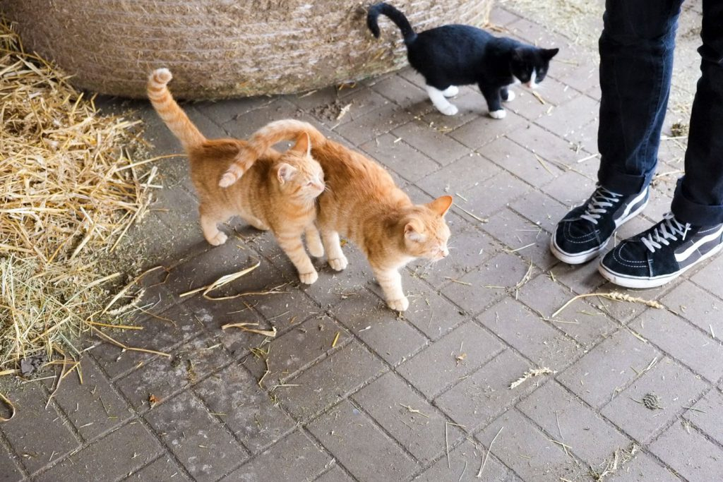 Katzen auf dem Ferienhof Rügen